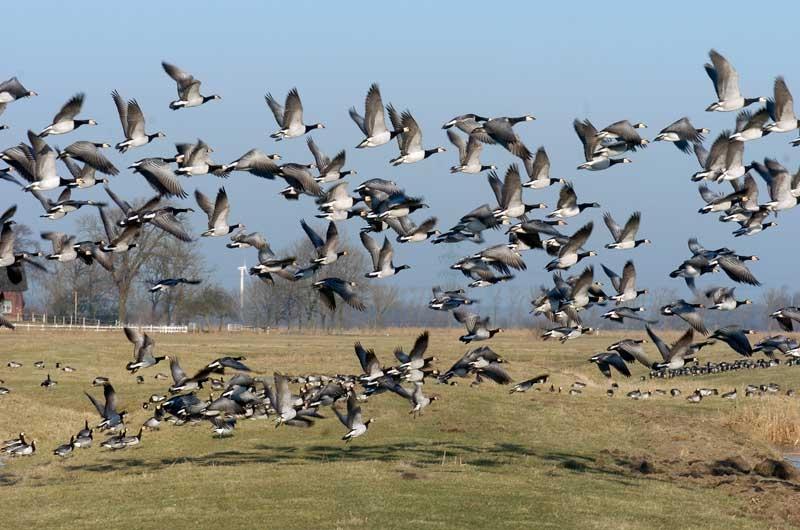 NABU Vogelstation Wedeler Marsch