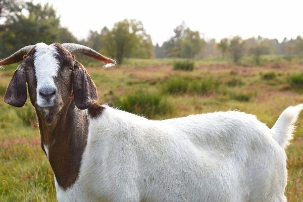 Goldener Herbst in Holstein