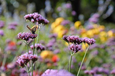 Blütenpracht im Arboretum Ellerhoop