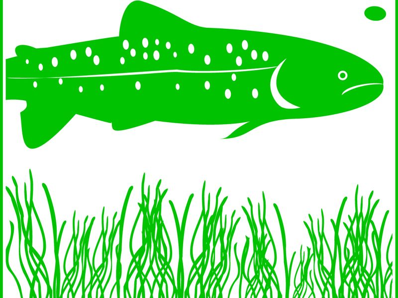 Signet der Radtour ist ein Fisch über Seegras schwimmend