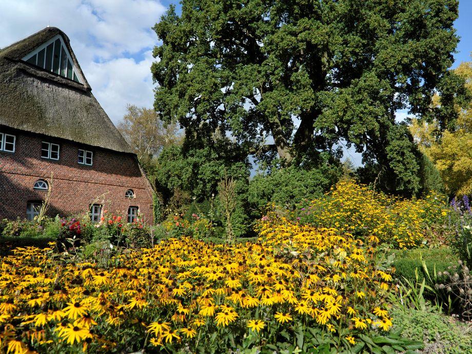 Rethdachhaus und Garten mit gelben Blumen im Aboretum