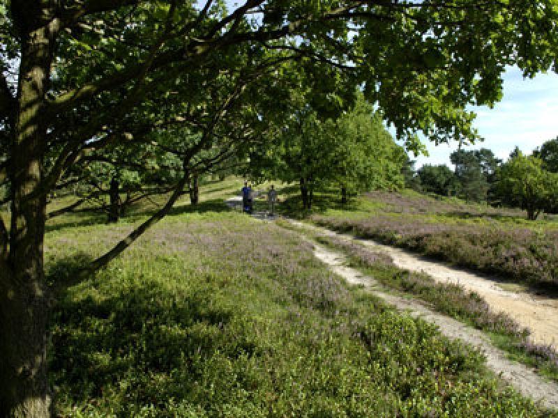 Der Boxberg im Naturpark Aukrug bietet viel Wanderwege, eine großen Kinderspielplatz und ein Restaurant mit Café.
