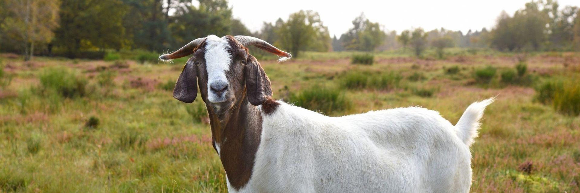 Saisonstart in Holstein