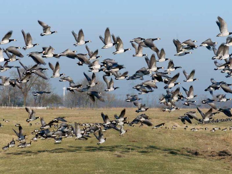 Die NABU Vogelstation gewährt Naturfreunden einen tieferen Einblick in die Vogelwelt.