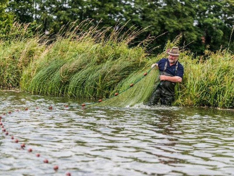 Leckere frische und geräucherte Fische von der Fischzucht Reese