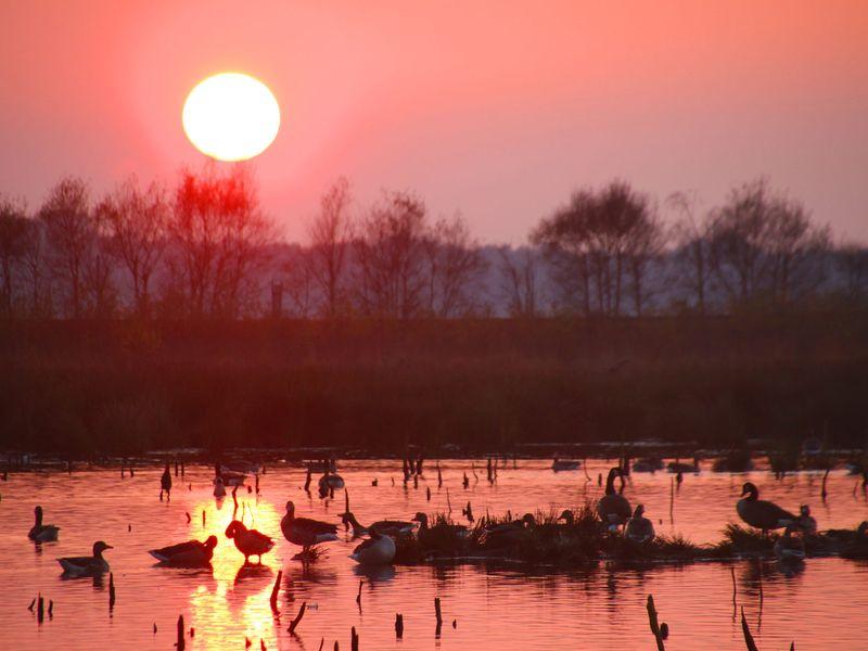 Das Bild zeigt den Sonnenuntergang über dem Himmelmoor bei Quickborn.