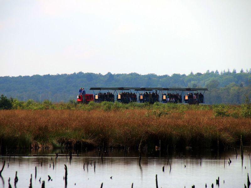 Die Moorbahn fährt mit Gästen durch das Himmelmoor bei Quickborn.