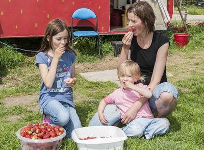 Ein Erdbeerhof in der Wilstermarsch