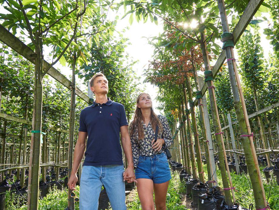 Ein Paar in einer spaziert durch eine Baumschule