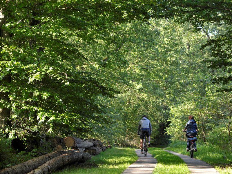 Zwei Radfahrer fahren durch einen dichten Wald