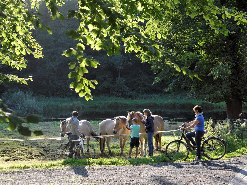 Eine Familie mit Rädern streichelt Pferde über den Zaun einer Weide
