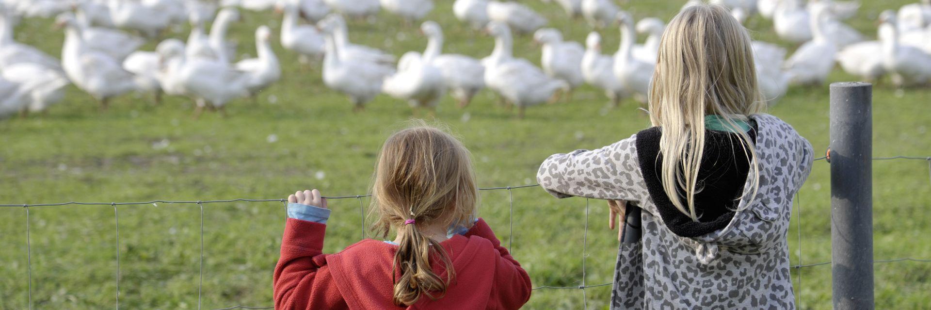 Hoffest in Holstein