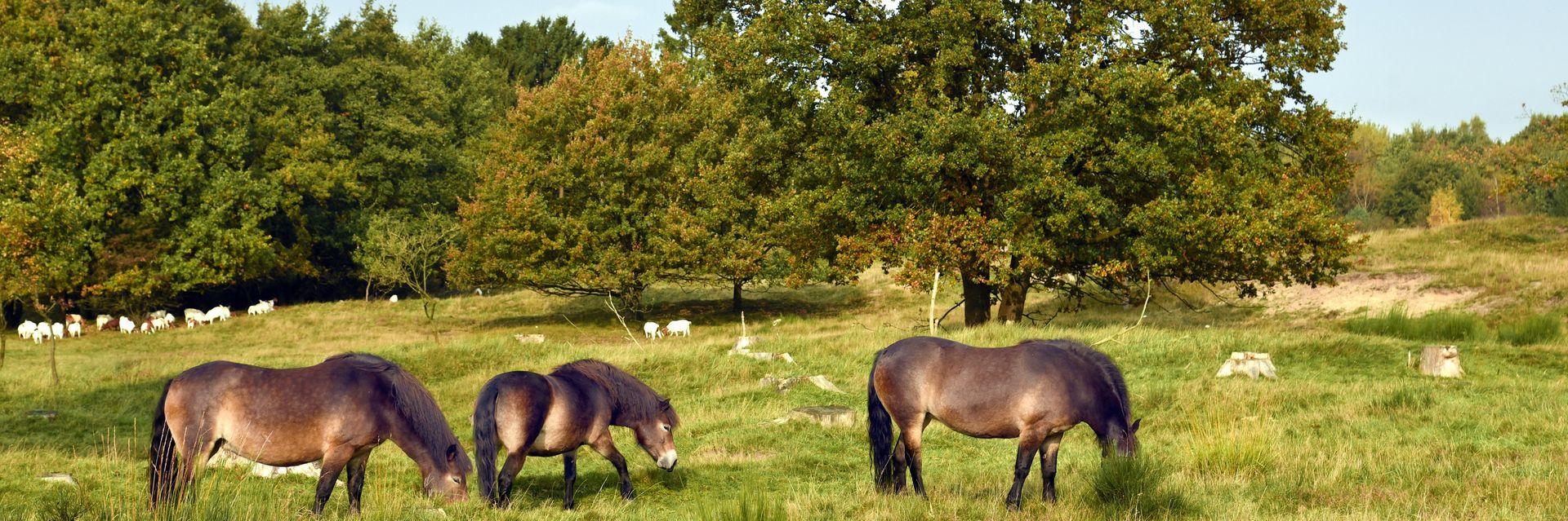 Spätsommer in Holstein