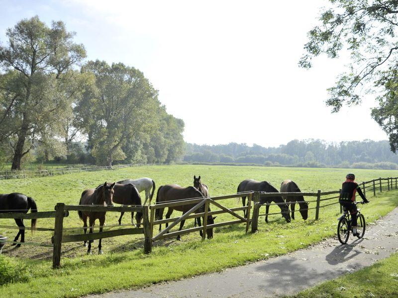 Radfahrer fährt an einer grünen Wiese mit Pferden vorbei
