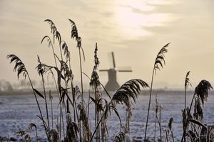 Winter in Holstein