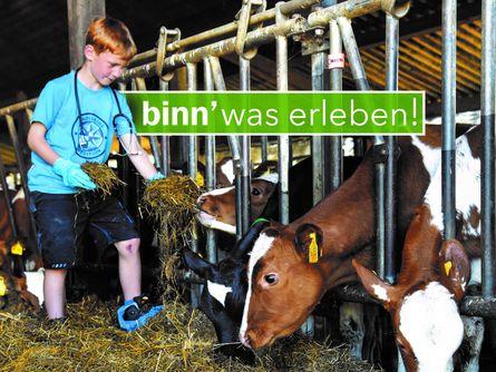 Junge füttert Kühe